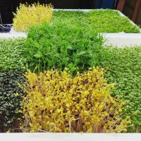 The Florida Microgreens Family