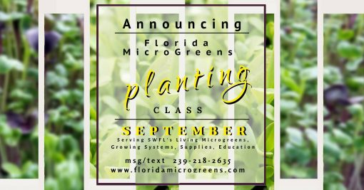 Florida Microgreens - Planting Class - September 8th