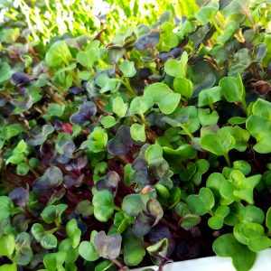 Florida MicroGreens Class Picture