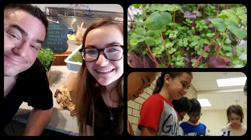 florida-microgreens-little-leaves-science-camp-picture-collage
