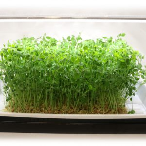 FLMG Home Grow Kit With Peas
